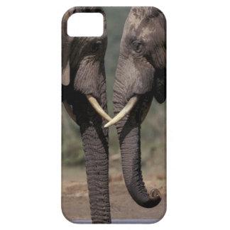 South Africa, Kalahari-Gemsbok NP, Gemsbok at iPhone 5 Case