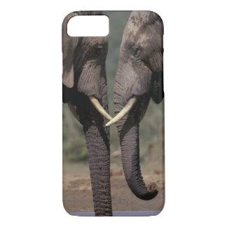 South Africa, Kalahari-Gemsbok NP, Gemsbok at iPhone 7 Case