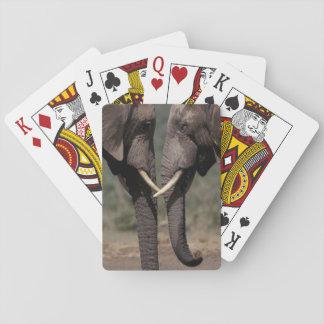 South Africa, Kalahari-Gemsbok NP, Gemsbok at Playing Cards