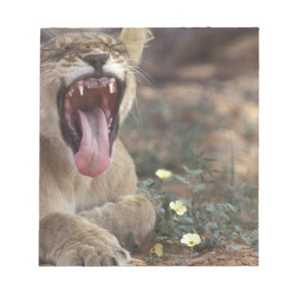 South Africa, Kgalagadi Transfrontier Park, Lion Notepad
