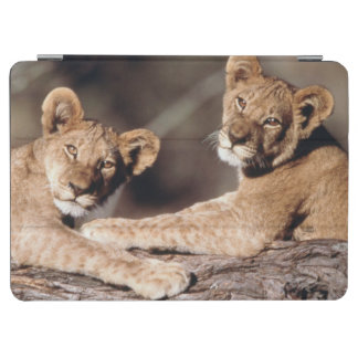 South Africa, lion cubs iPad Air Cover