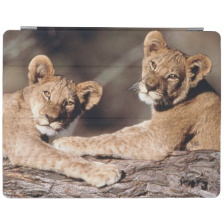 South Africa, lion cubs iPad Cover