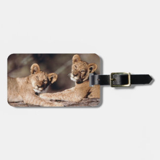 South Africa, lion cubs Luggage Tag
