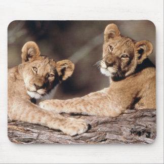 South Africa, lion cubs Mouse Mat