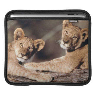 South Africa, lion cubs Sleeve For iPads