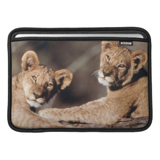 South Africa, lion cubs Sleeve For MacBook Air