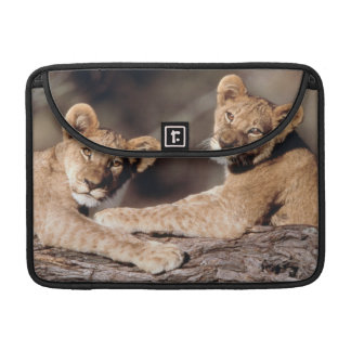 South Africa, lion cubs Sleeve For MacBooks