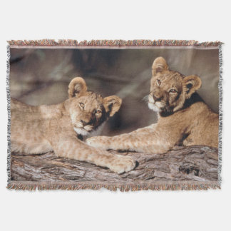 South Africa, lion cubs Throw Blanket