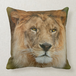South Africa Majestic Lion Close up Cushion