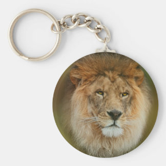 South Africa Majestic Lion Close up Key Ring