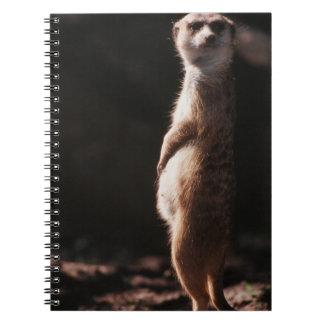 South Africa, Meerkat looking away Notebook