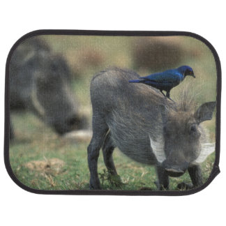 South Africa, Pilanesburg GR, Warthog Car Mat