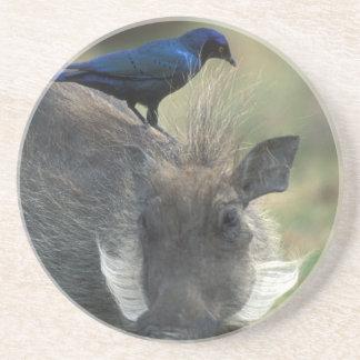South Africa, Pilanesburg GR, Warthog Coaster