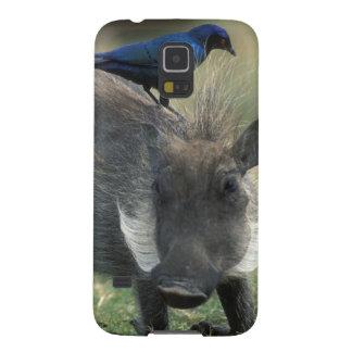 South Africa, Pilanesburg GR, Warthog Galaxy S5 Case