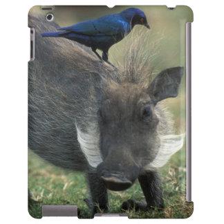 South Africa, Pilanesburg GR, Warthog iPad Case