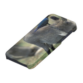 South Africa, Pilanesburg GR, Warthog iPhone 5/5S Covers