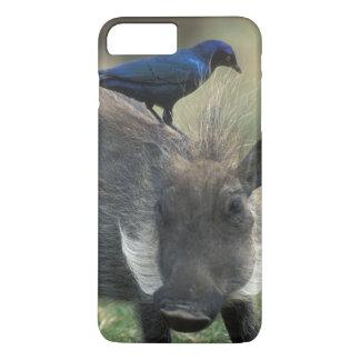 South Africa, Pilanesburg GR, Warthog iPhone 7 Plus Case