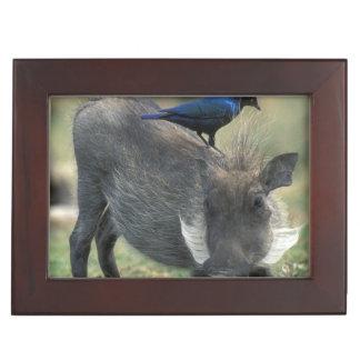 South Africa, Pilanesburg GR, Warthog Keepsake Box