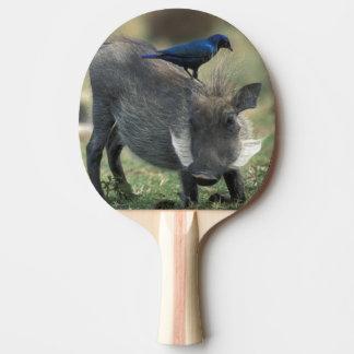 South Africa, Pilanesburg GR, Warthog Ping Pong Paddle