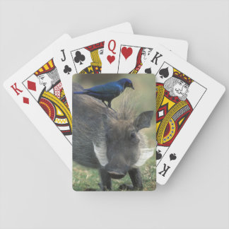 South Africa, Pilanesburg GR, Warthog Playing Cards