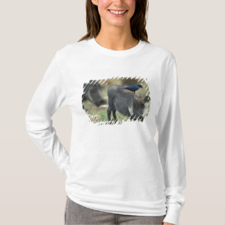 South Africa, Pilanesburg GR, Warthog T-Shirt