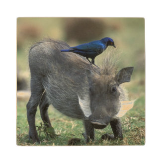 South Africa, Pilanesburg GR, Warthog Wood Coaster