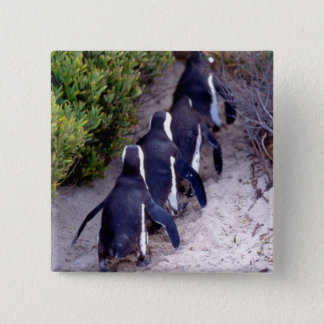 South Africa, Simons Town. Follow the leader. 15 Cm Square Badge