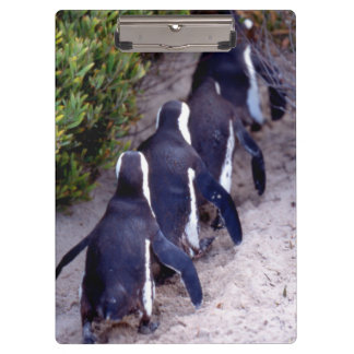 South Africa, Simons Town. Follow the leader. Clipboard