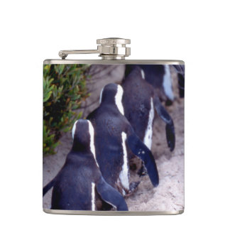South Africa, Simons Town. Follow the leader. Flask