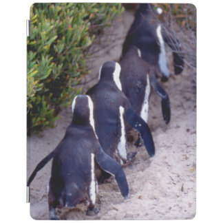 South Africa, Simons Town. Follow the leader. iPad Cover
