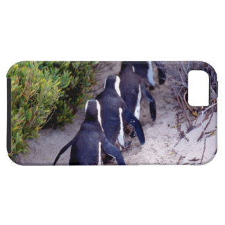 South Africa, Simons Town. Follow the leader. iPhone 5 Cover