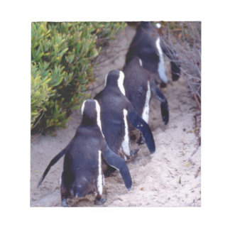 South Africa, Simons Town. Follow the leader. Notepad