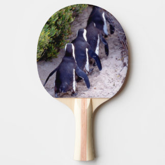 South Africa, Simons Town. Follow the leader. Ping Pong Paddle