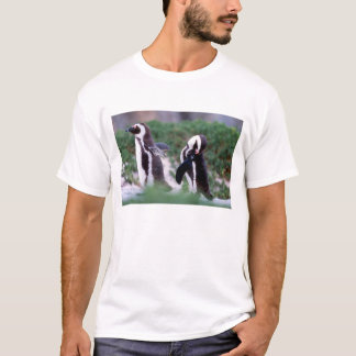 South Africa, Simons Town. Grooming Jackass T-Shirt
