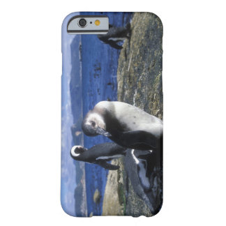 South Africa, Simon's Town, Jackass Penguin Barely There iPhone 6 Case