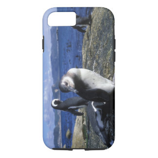 South Africa, Simon's Town, Jackass Penguin iPhone 8/7 Case