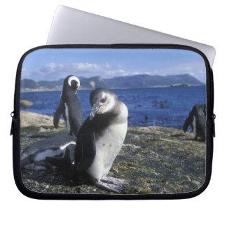 South Africa, Simon's Town, Jackass Penguin Laptop Sleeve