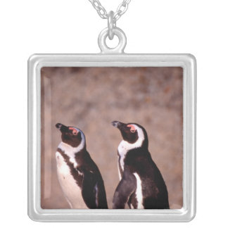 South Africa, Simons Town. Jackass Penguins 2 Silver Plated Necklace