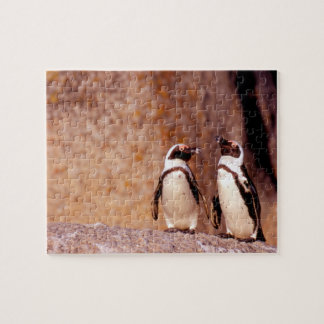 South Africa, Simons Town. Jackass Penguins 3 Jigsaw Puzzle