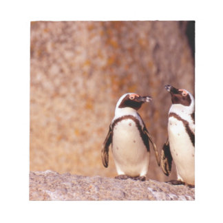 South Africa, Simons Town. Jackass Penguins 3 Notepad