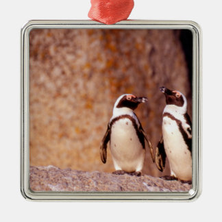 South Africa, Simons Town. Jackass Penguins 3 Silver-Colored Square Decoration
