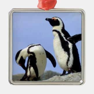 South Africa, Simons Town. Jackass Penguins Christmas Ornament