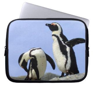 South Africa, Simons Town. Jackass Penguins Laptop Sleeve