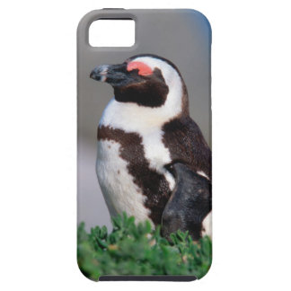South Africa, Simons Town. Sleeping Jackass Case For The iPhone 5