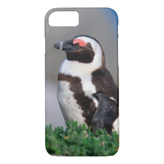 South Africa, Simons Town. Sleeping Jackass iPhone 7 Case