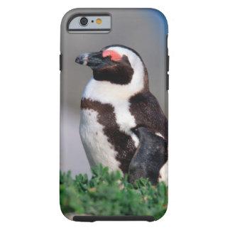 South Africa, Simons Town. Sleeping Jackass Tough iPhone 6 Case