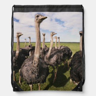 South Africa, View of ostrich Drawstring Bag