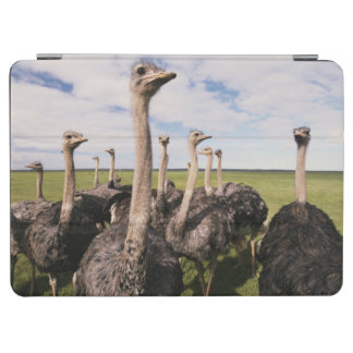 South Africa, View of ostrich iPad Air Cover