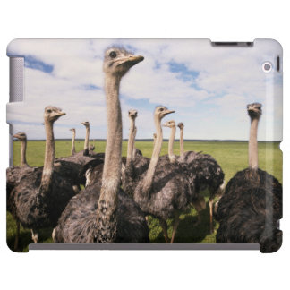 South Africa, View of ostrich iPad Case