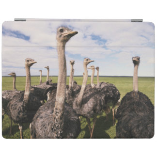 South Africa, View of ostrich iPad Cover